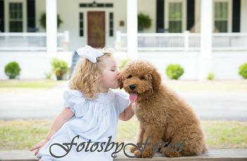 gabby and rocco Labradoodle puppy