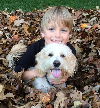 Labradoodle puppy with little boy