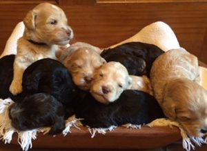 lucys puppies 3 weeks old