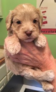 lucys red band boy 4wks old 8.31.16