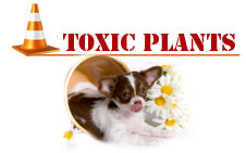 toxicplants_title1